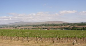 Rattlesnake_Mountain_as_seen_across_Chandler_Reach_vineyard_-_1